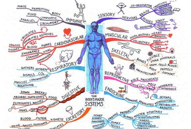 Mind map по биологии